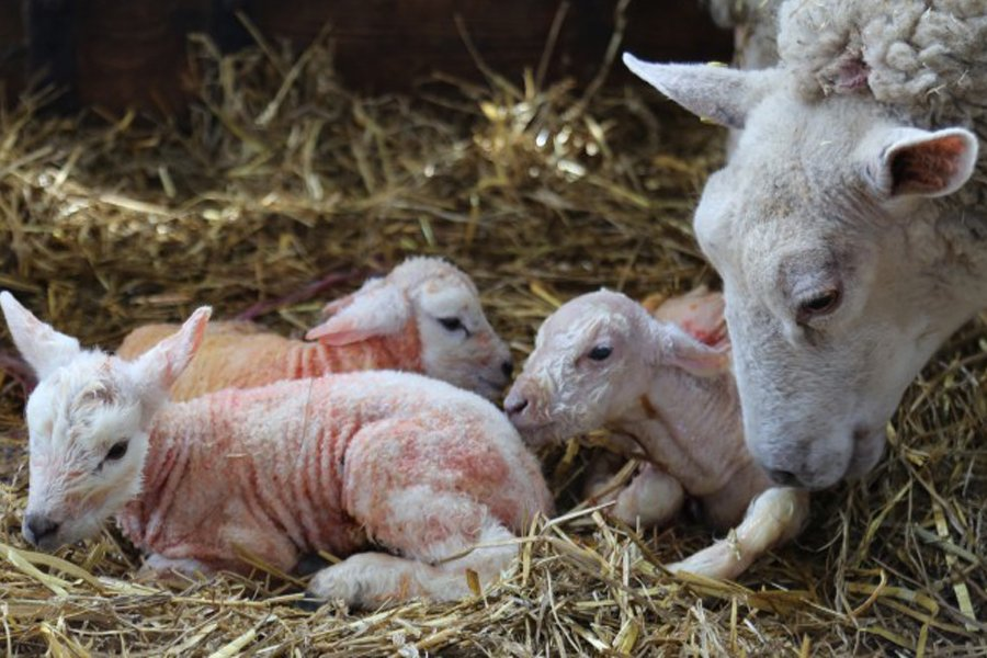Mother's Day at Cannon Hall Farm