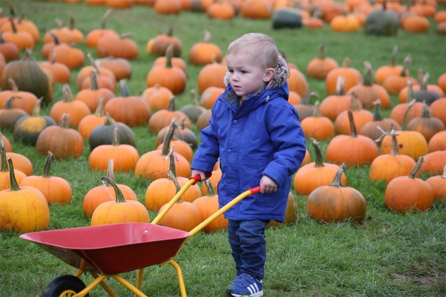 Pumpkin Festival at Cannon Hall Farm
