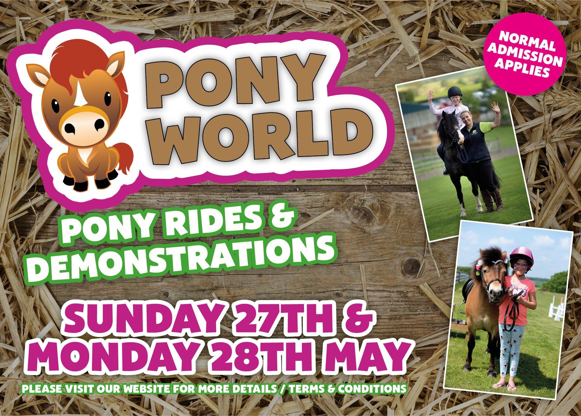 Thornton Hall Farm Pony world