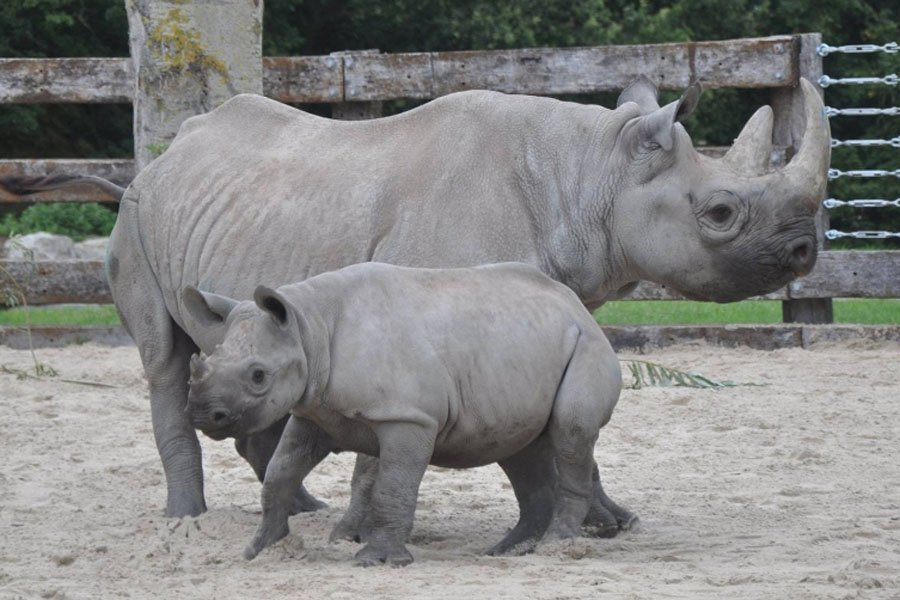 flamingo-land-black-rhinos