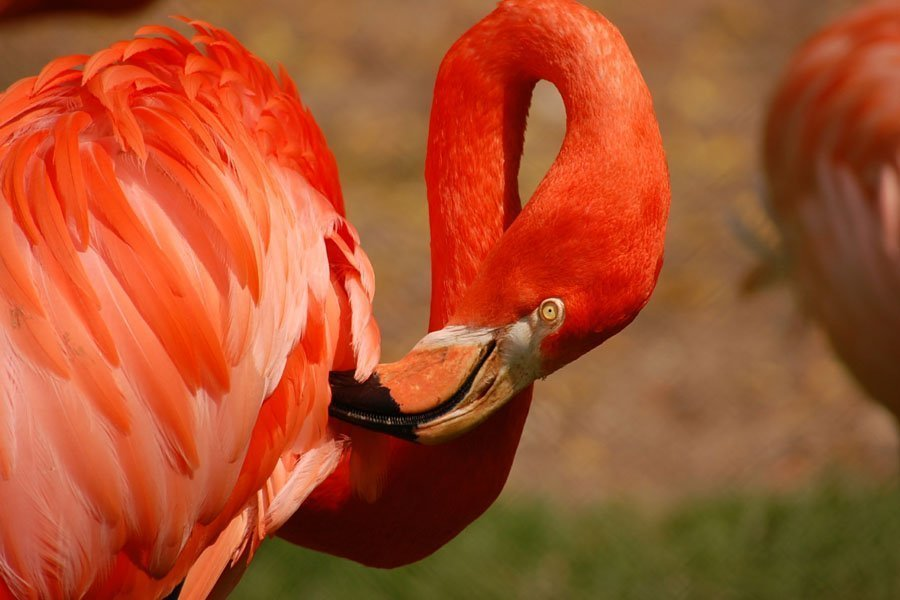 Flamingo Land Winter Zoo