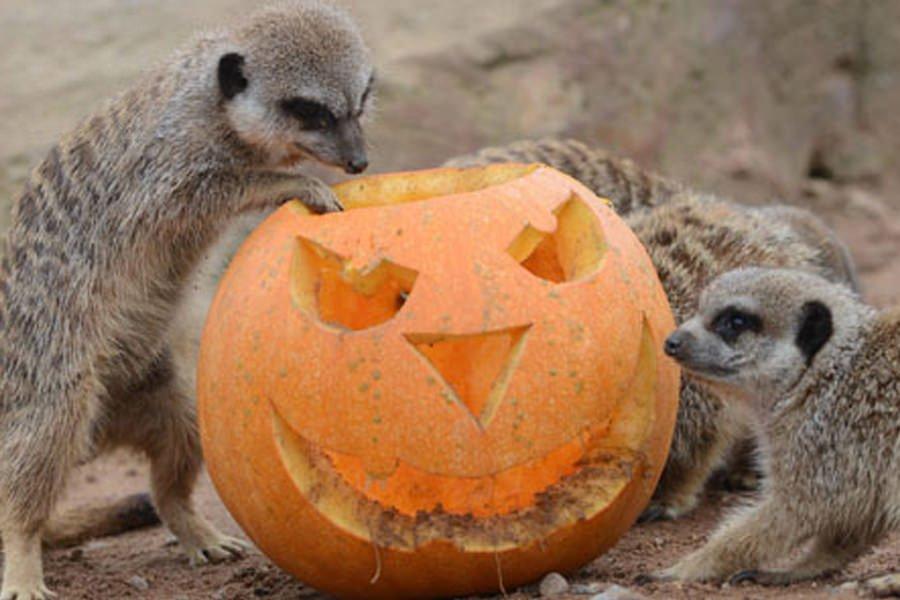 October Halloween events