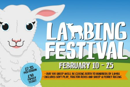 Lambing Festival at Cannon Hall Farm